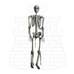 Kostra Lidského Těla